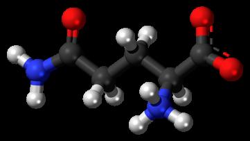 l-glutamine-leaky gut